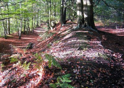 A near by Iron Age hill fort. The great earth ramparts at Oldbury Hill.