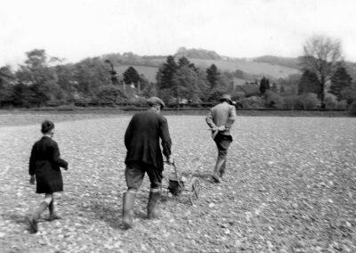 Hilldrop Farm 1957 - using the seed harrow