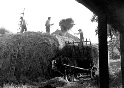 Making stack - Cecil unloading to Fred Graves and son Fred